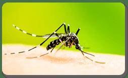 Zika Vírus e a Gravidez