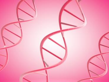 3d pink DNA strands